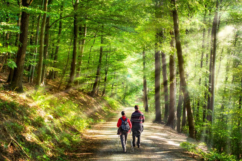 Разходка в гората през пролетта
