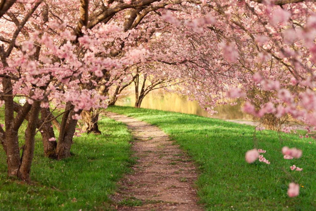 Цъфнали дървета през пролетта