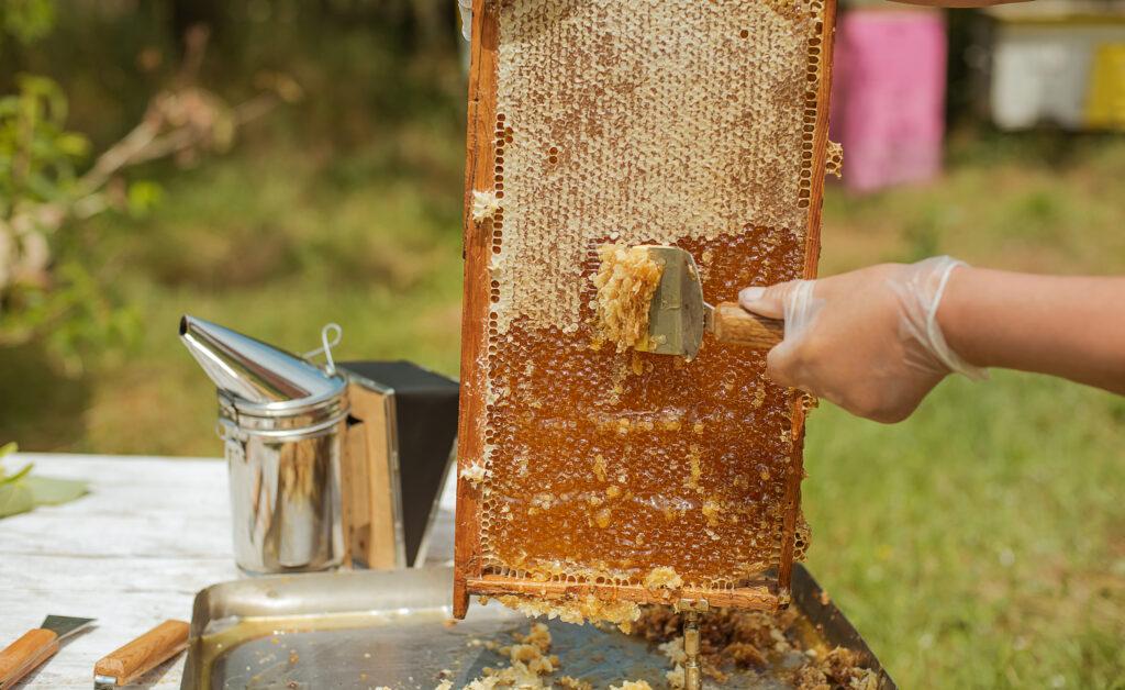 Вадене на мен от пчелна пита