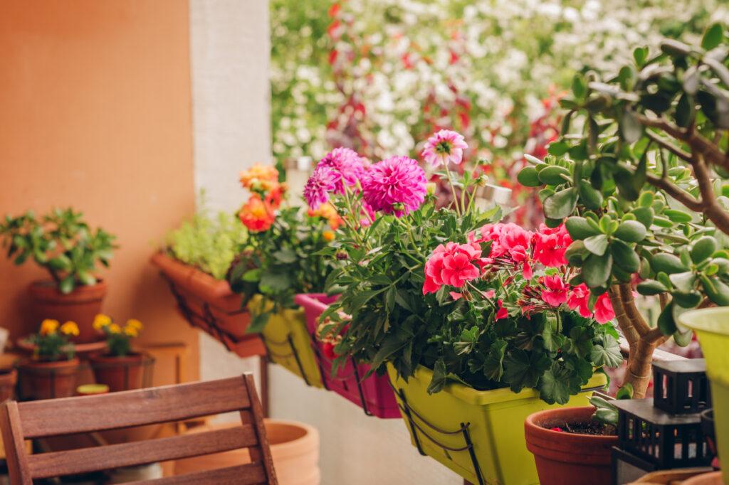 Цветя в саксии на балкон