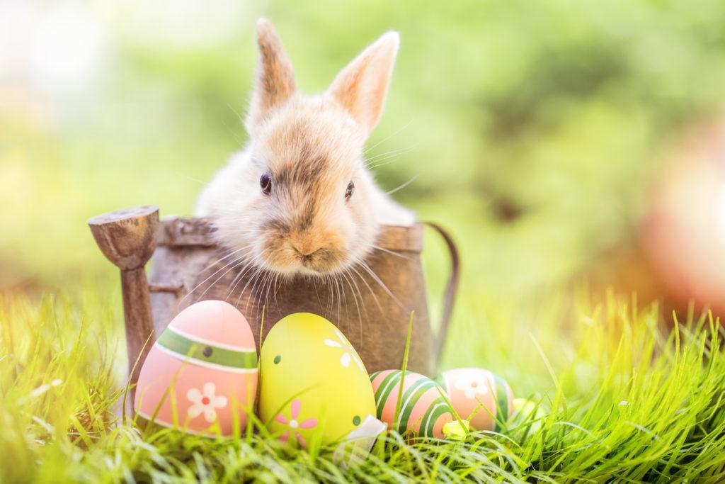 Великденски заек и боядисани яйца на Великден