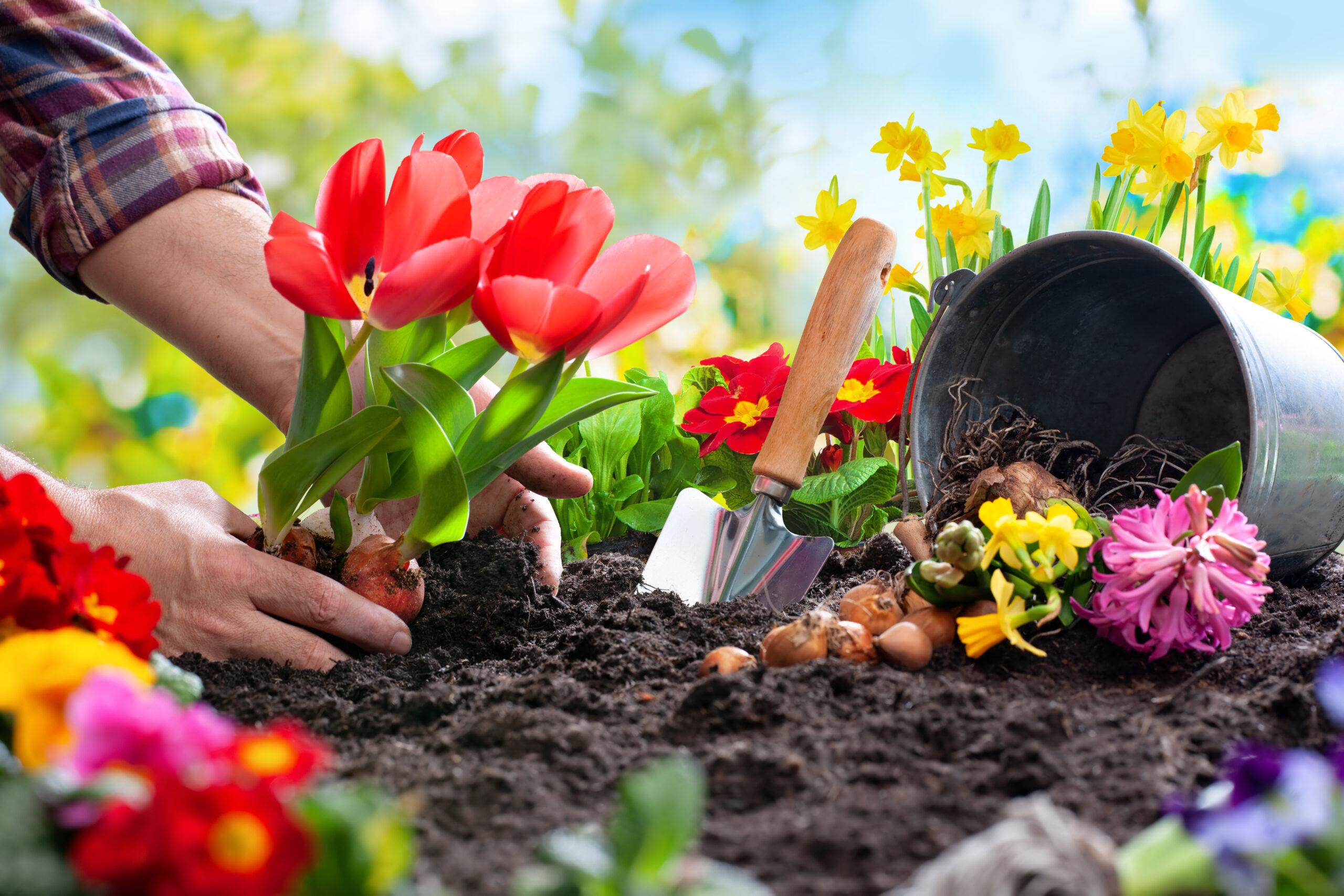 Полезни трикове за отглеждане на цветя