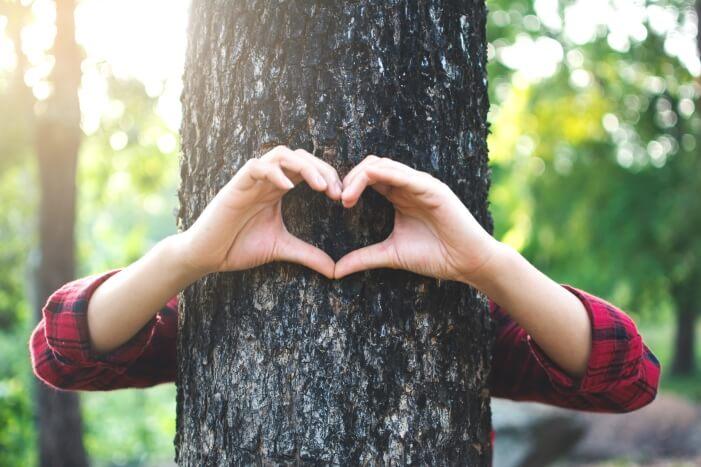 Защо е нужно да опазваме горите и как да го правим?