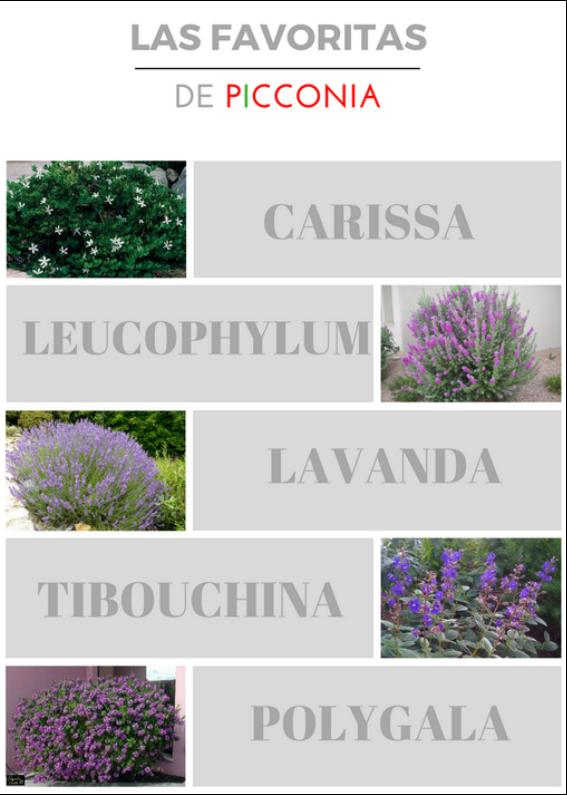 Las plantas favoritas de Picconia para tu jardín