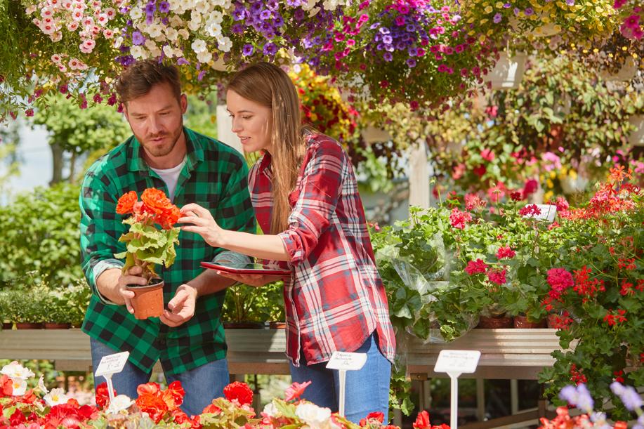 10 plantas de exterior (resistentes) para tu jardín o terraza