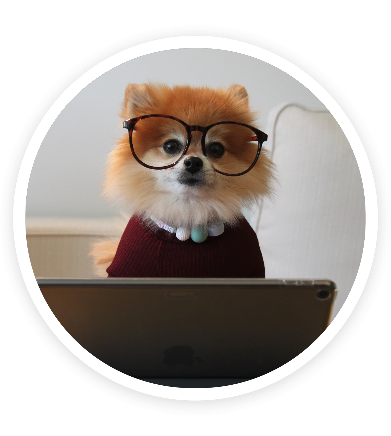 A friendly dog masquerading as a customer service professional