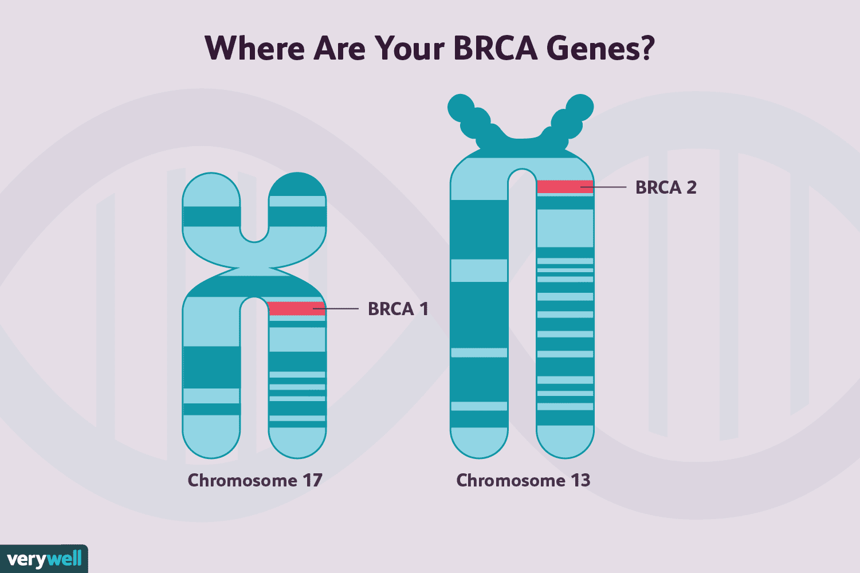 genetic mutations brca infographic