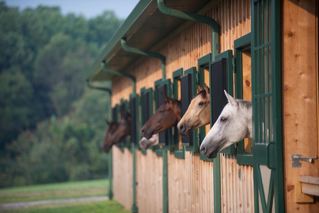 Horses peaking their heads
