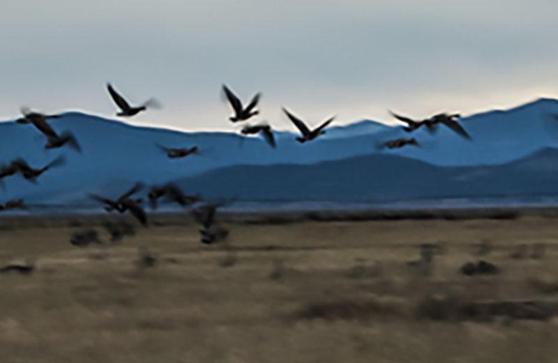 Birds flying in field