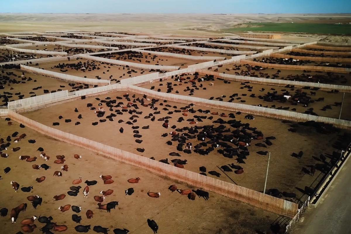 Close up of cattle eating in front of HerdWhistle antenna