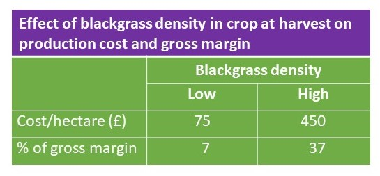 Cost of blackgrass infestation
