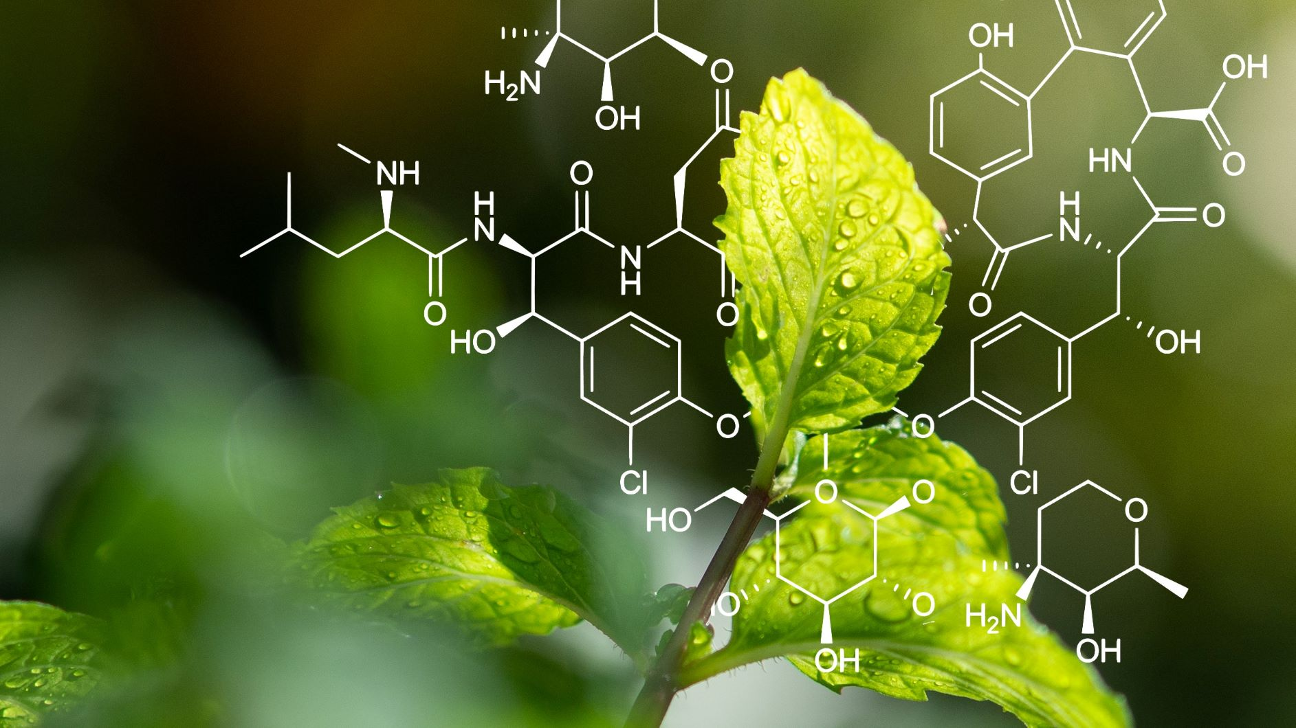 CDD Vault boosts moa's in vivo herbicide discovery