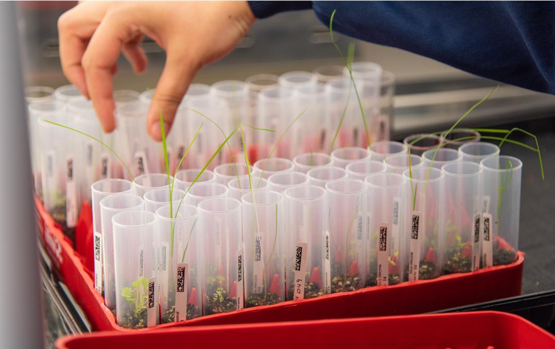 Biology Scientist, Phenotypic Screening position– MoA-GALAXY