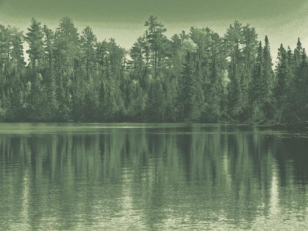 Minnesota's Trees: Five Common Native Species