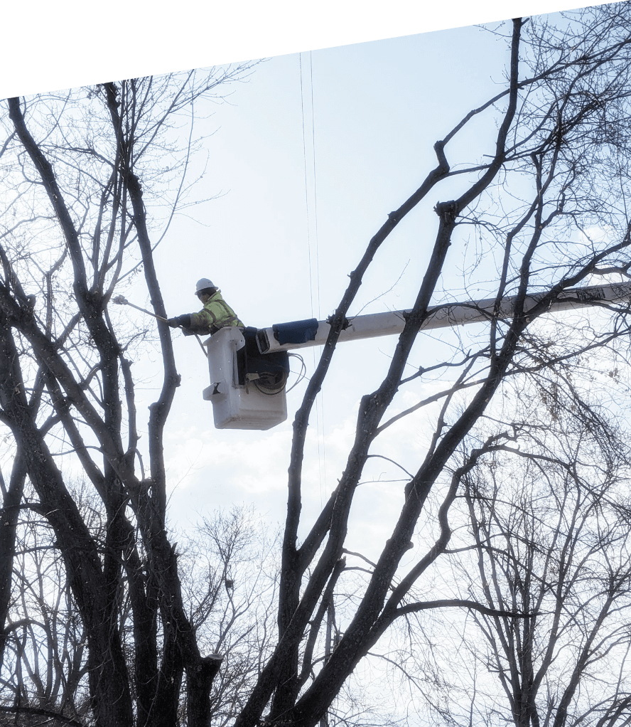 TWorker in bucket truck trimming trees. We provide tree trimming services to municipalities, contractors & utility companies