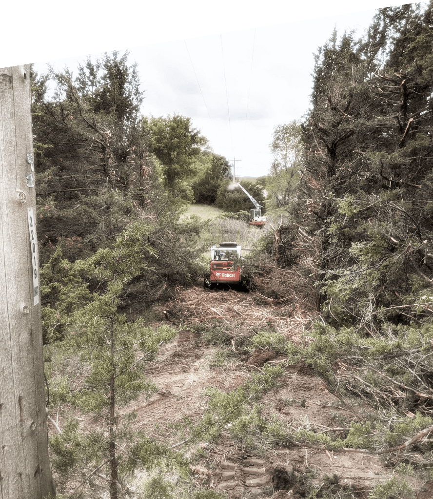 Long shot of grown over vegetation and tall trees with excavator in the middle, working to move & sort brush in Minnesota