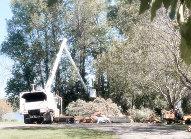 White TreeStory bucket truck at work trimming trees. Building materials on the ground & trees in background