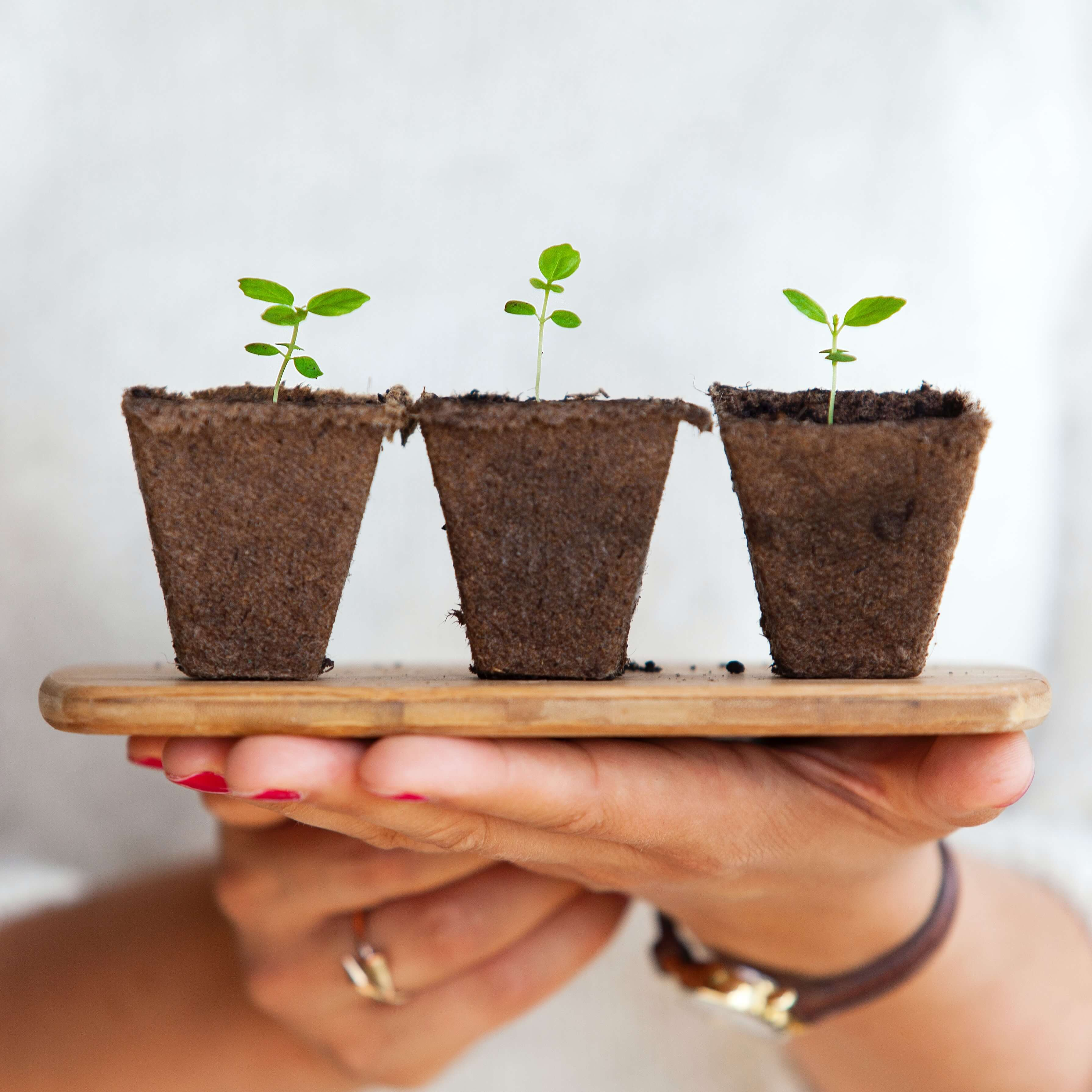 early stage plants growing like L&D budding at your company