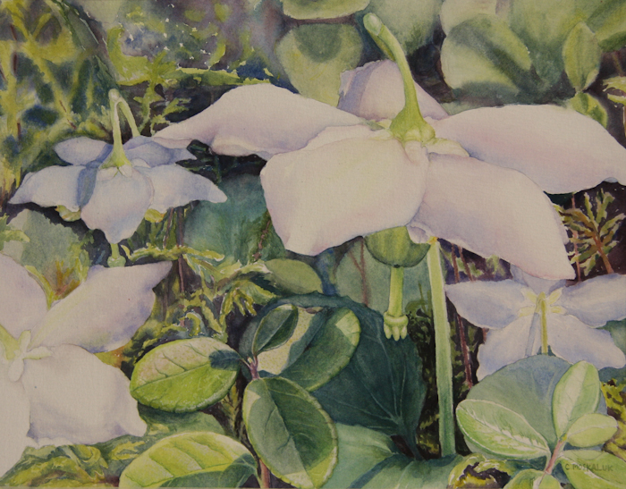 Wintergreen & Twinflower