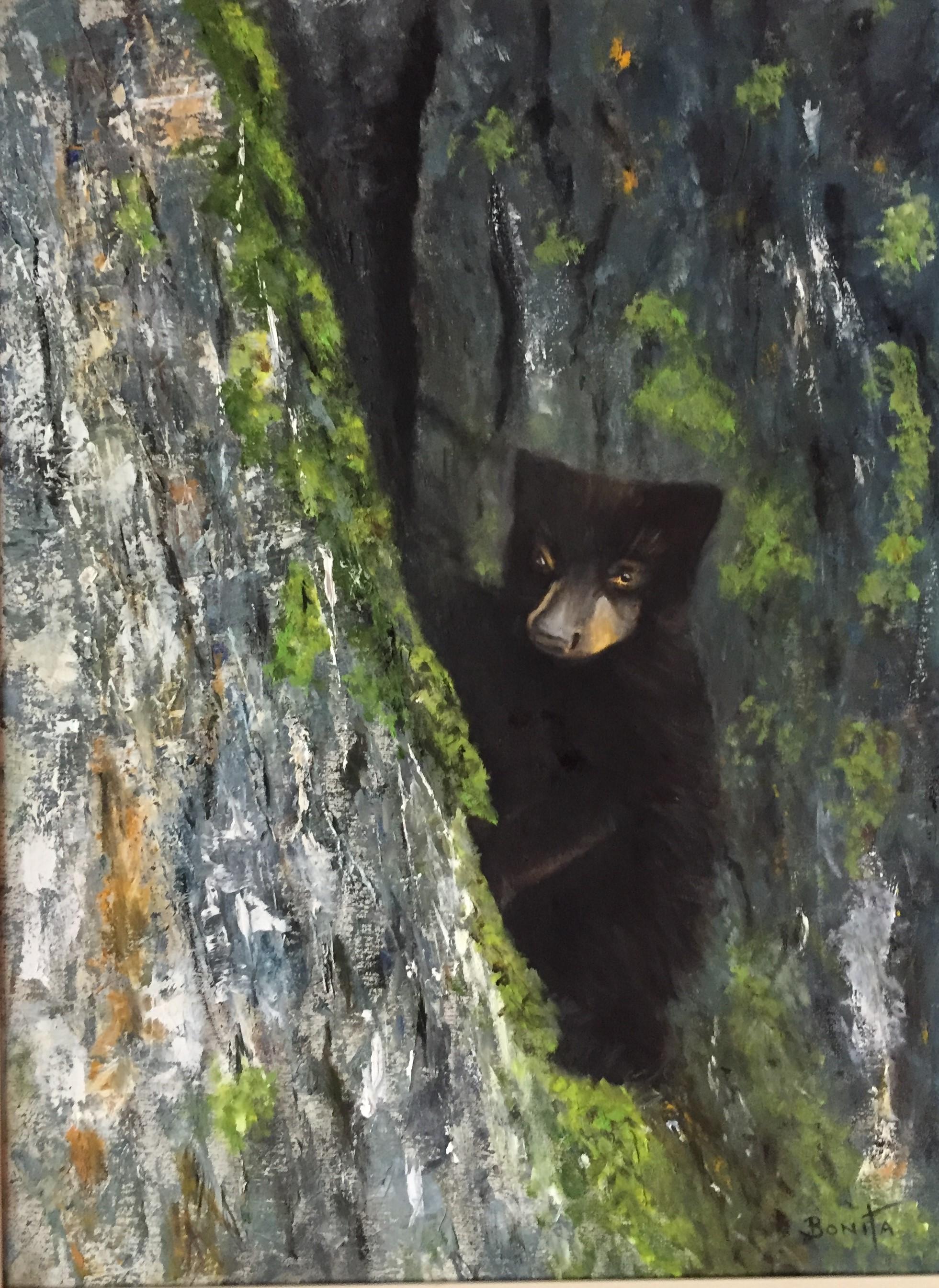 Henry's Bear