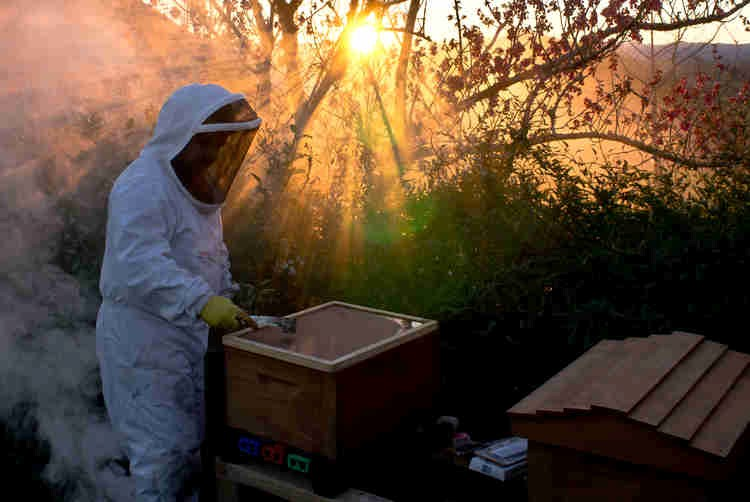 MyApiary creates a buzz for beekeepers