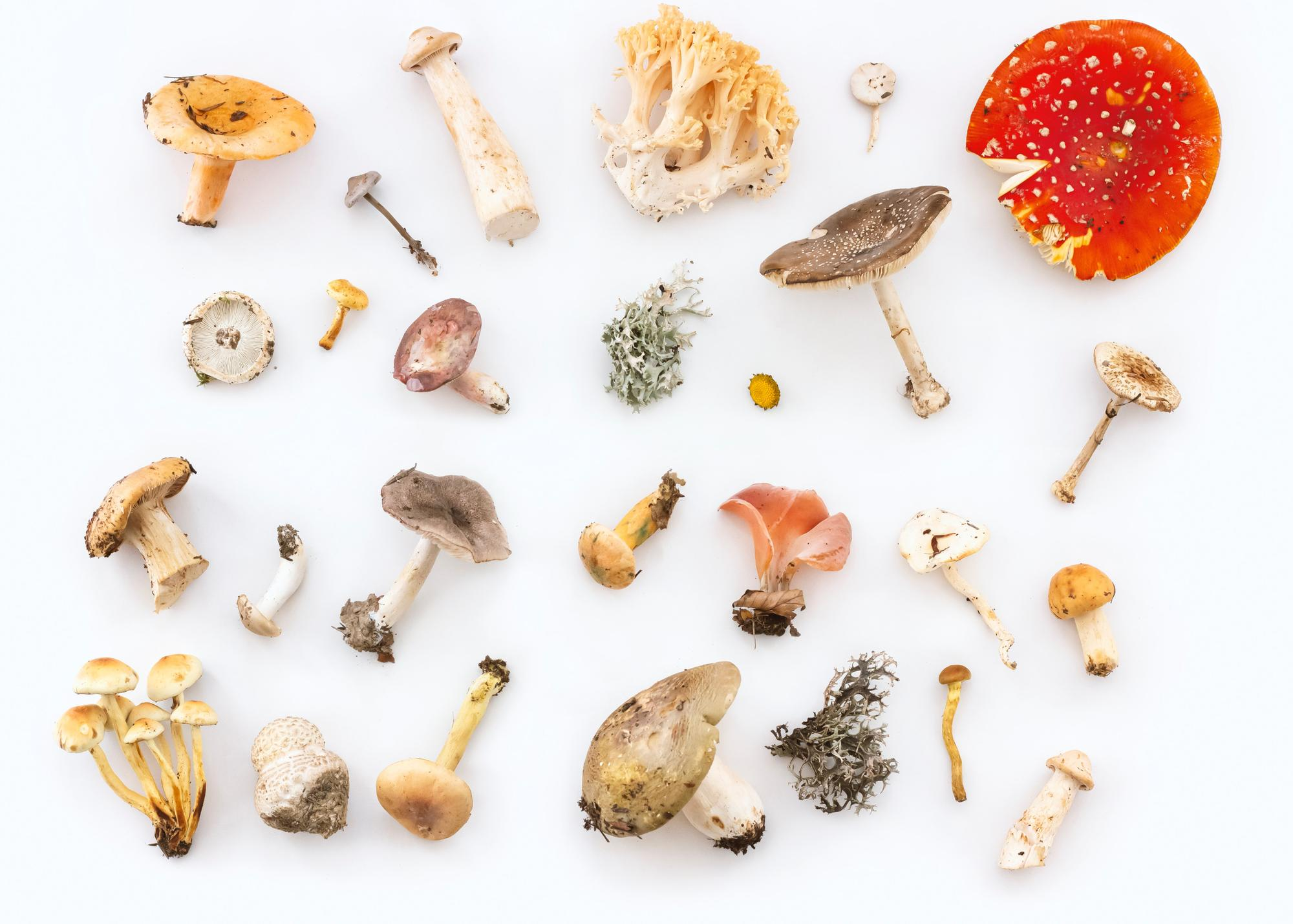 The mushroom queendom is full of variety and medicinal benefits.