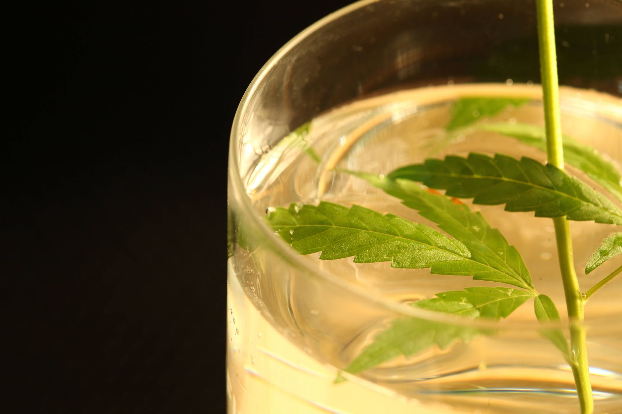 Cannabis Infused Lemonade is the perfect summer drink