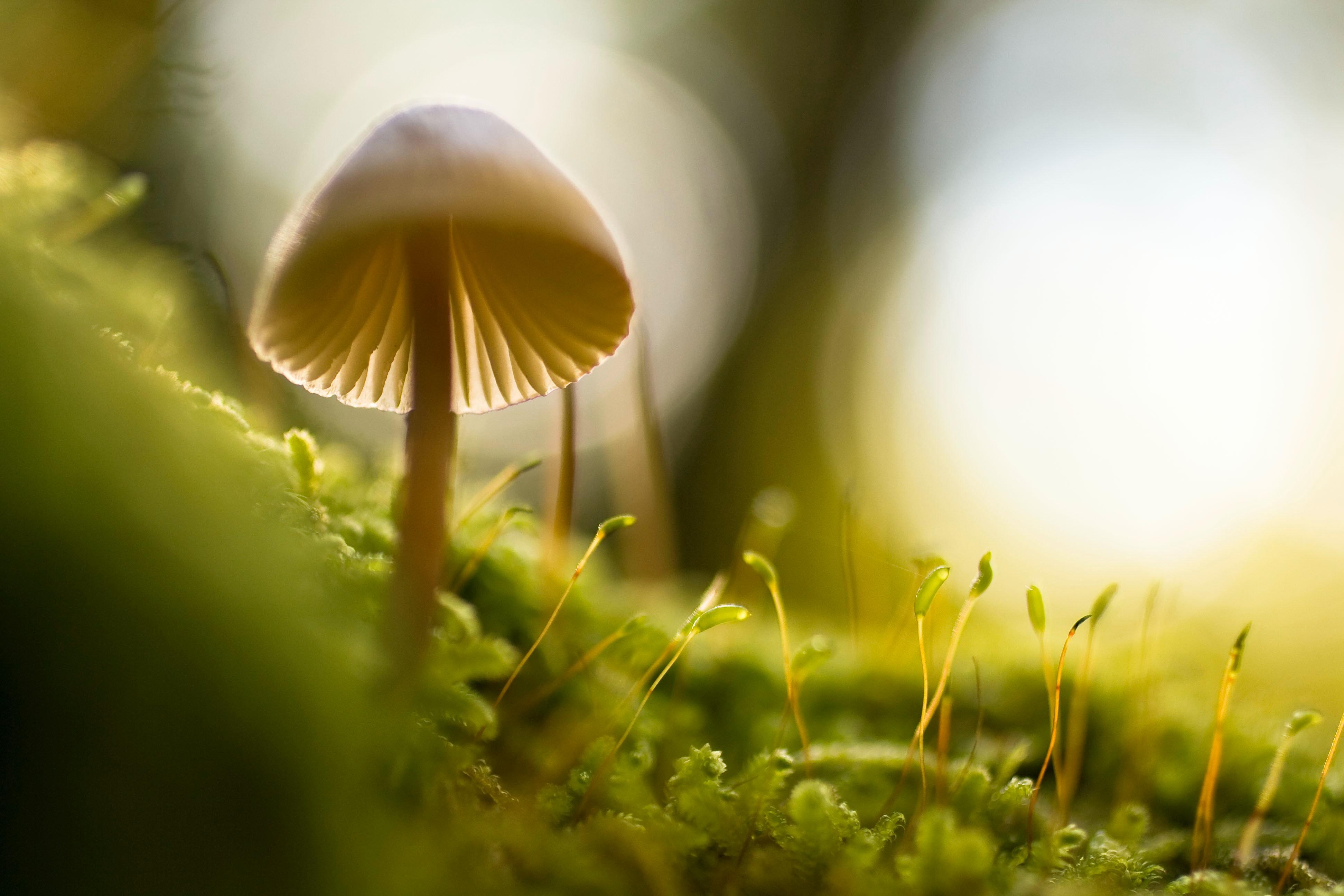 Magic Mushroom Grow Kits - My Personal Plants