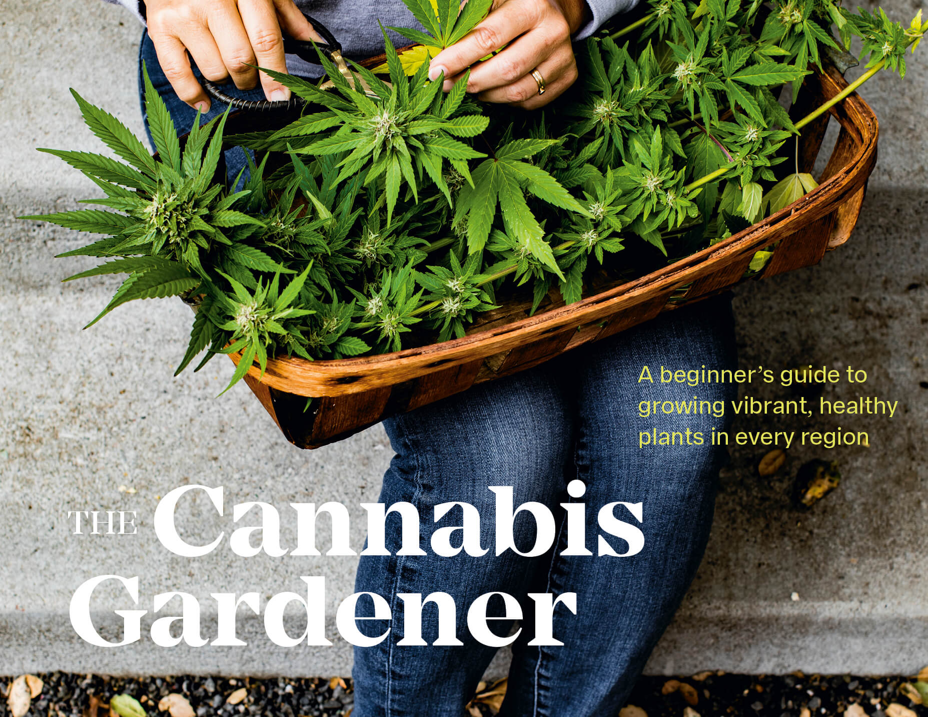 Growing Cannabis in the Garden - My Personal Plants