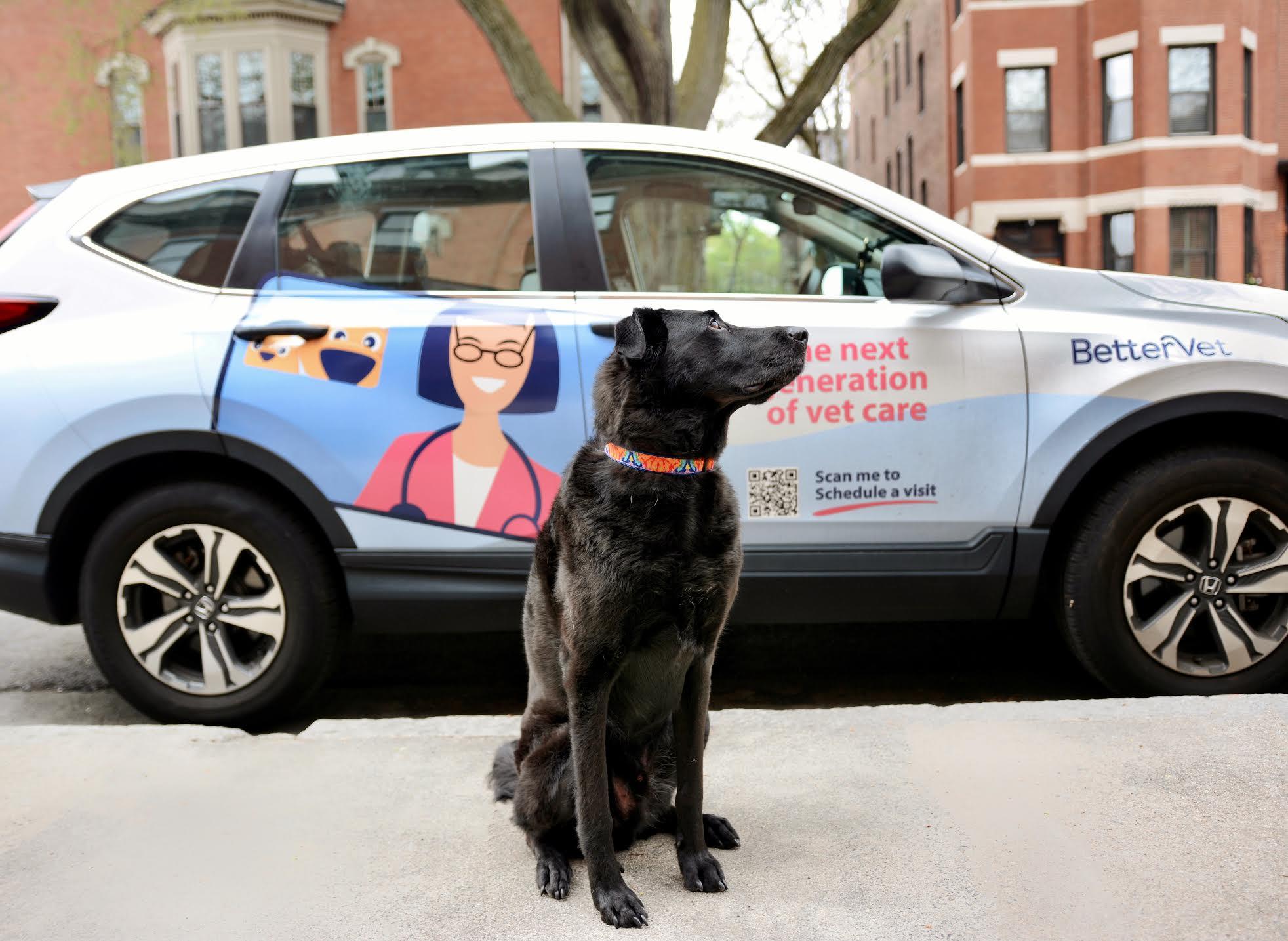 Dog sitting and BetterVet car on the background image.