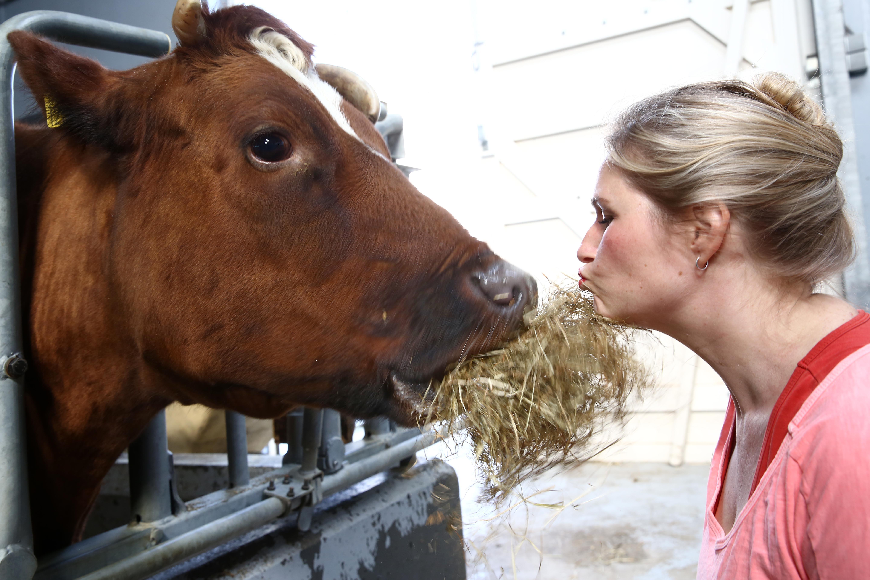 Met een koe op de foto: fotosessies op 3 oktober