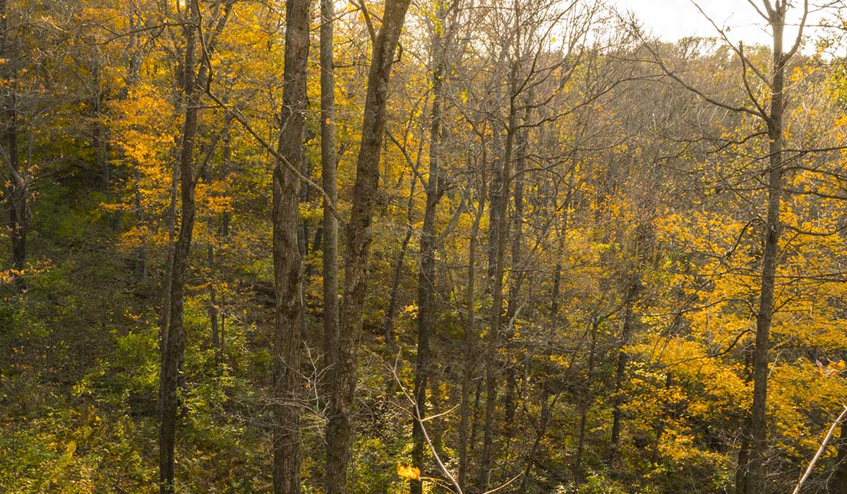 View from the tree stand during an October sit.