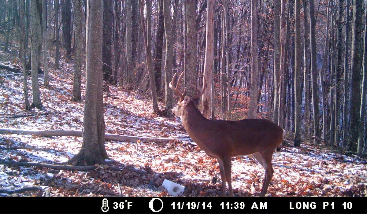 Trail camera photo of buck in the winter