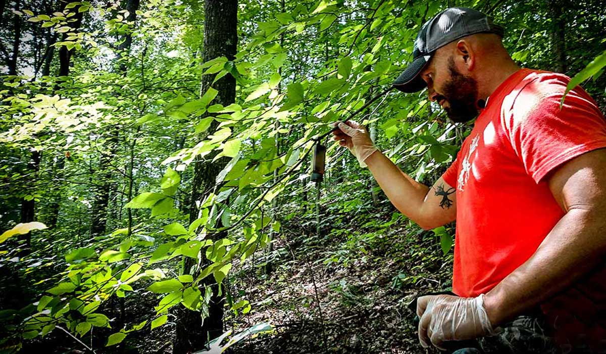 Use buck scent lures to your advantage