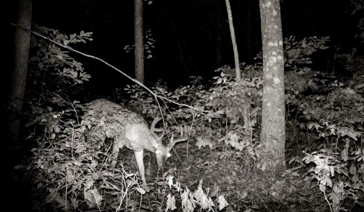 Deer behavior on camera provides a wealth of information