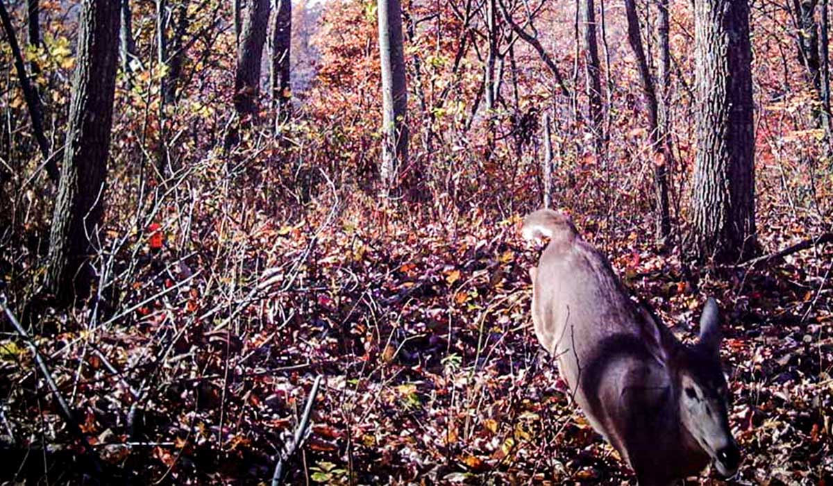 Utilize trail cameras and their data