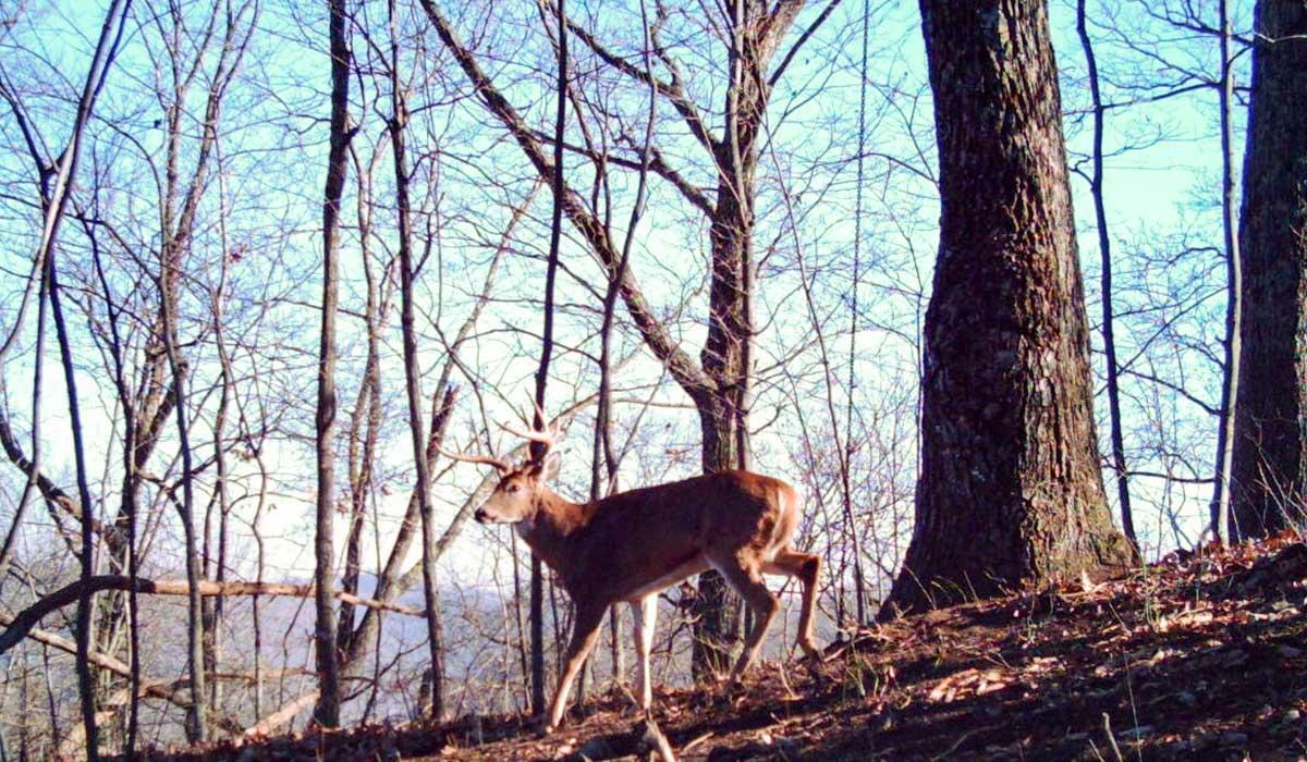 Using wind when hunting deer