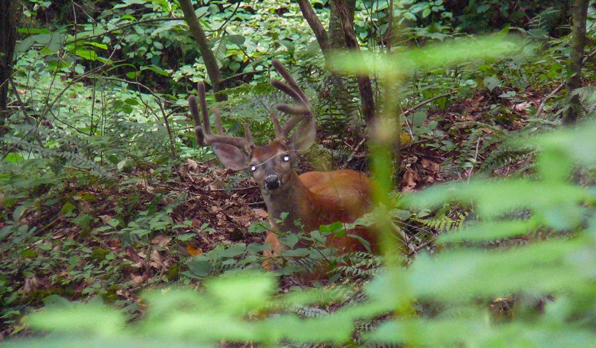 Mature bucks are watching