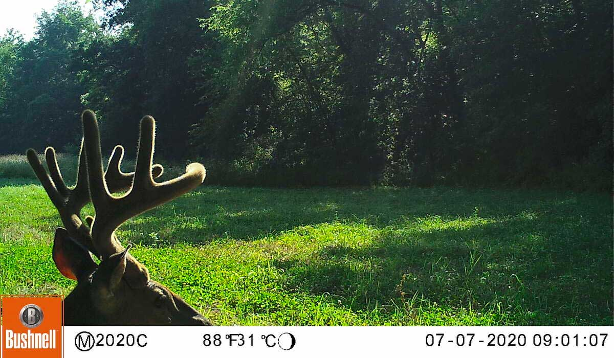 A Guide to Trail Camera Features