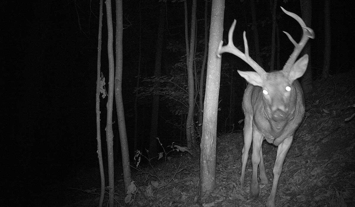 trail camera flash choices