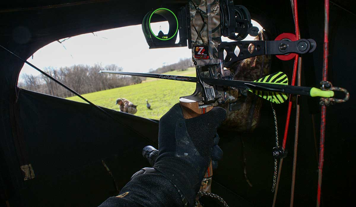 bowhunting turkey from a blind