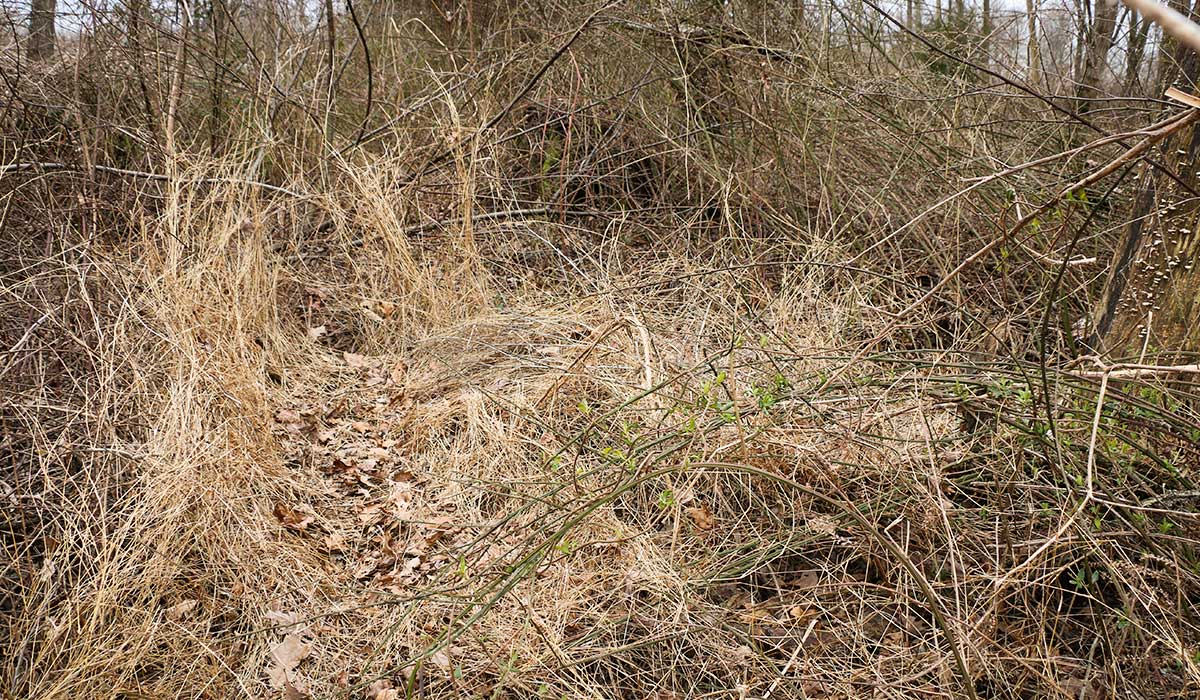 Wind can make a difference on where a deer beds