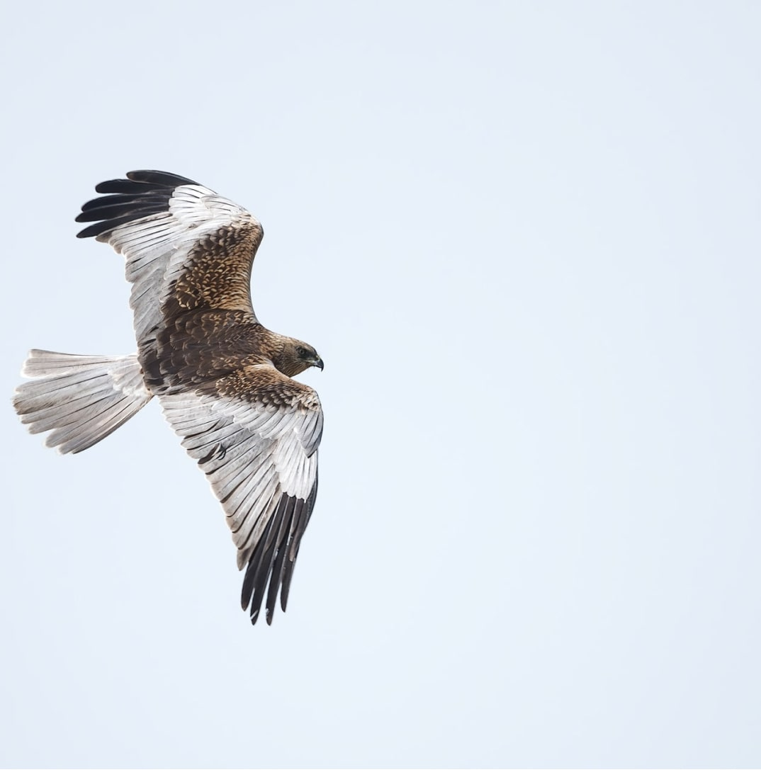 """Eagle flying free. It represents the section """"No contracts or commitments"""" of the page"""