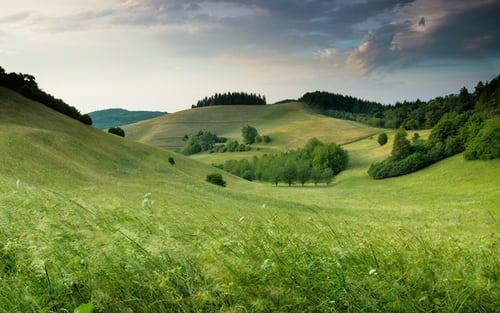 Grassy hills and trees