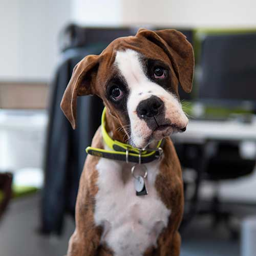 image of an office dog