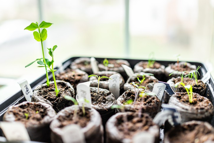 The Positive Effect of Plants and Nature on our Lives