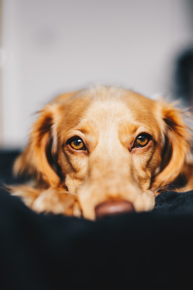 Dog ACL Surgery – What to Expect