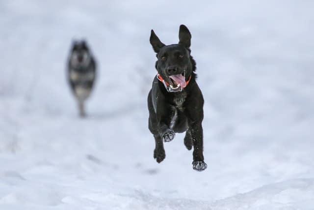 Hyper Dog Program