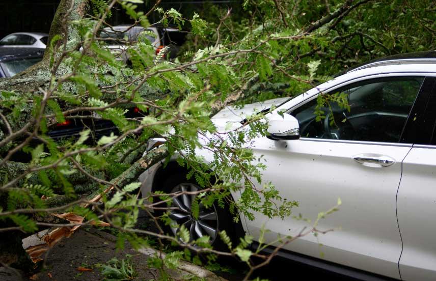 car crash into a green tree