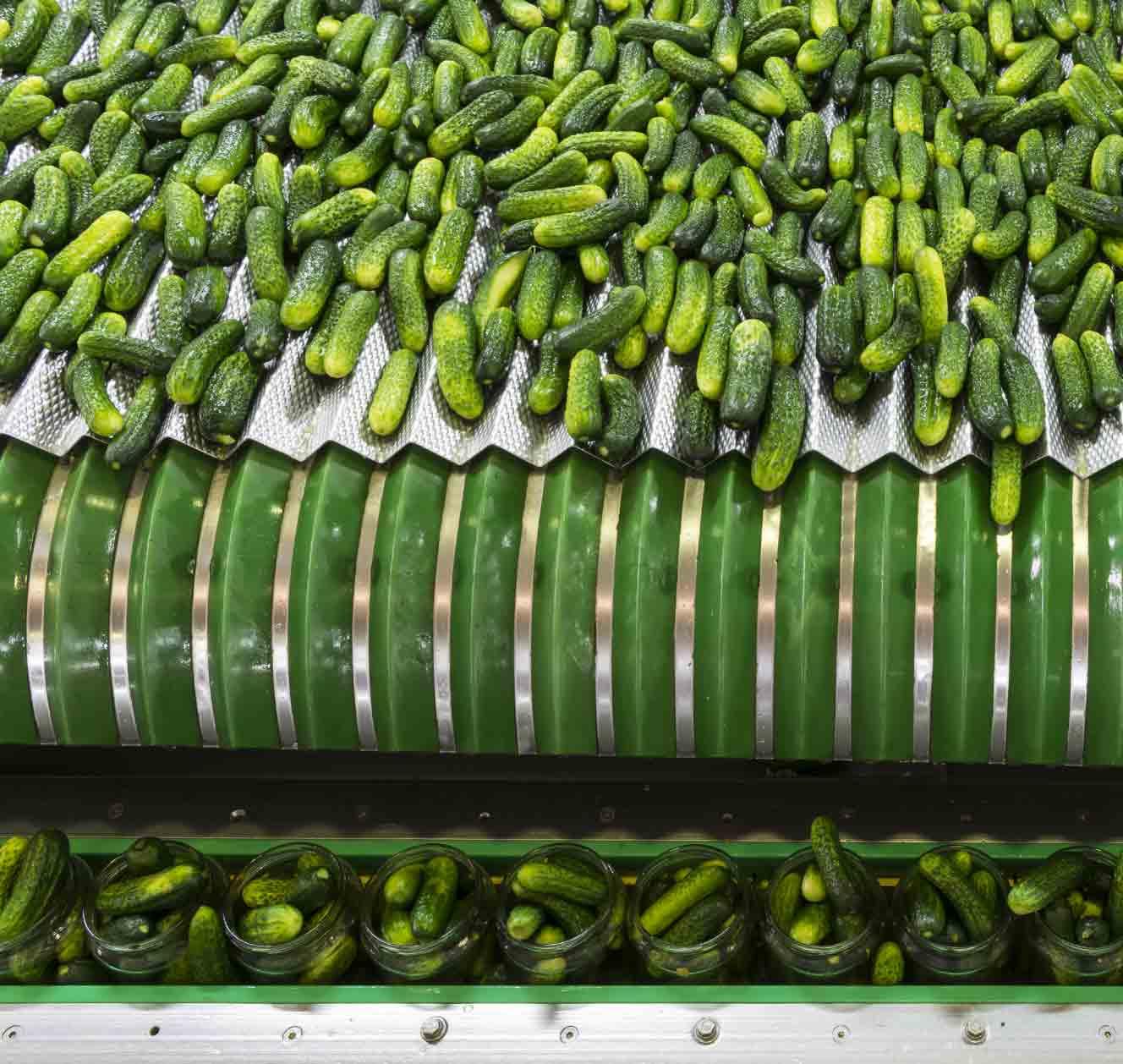 bulk pickles on production line